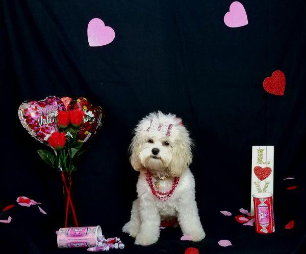 Tootsie Valentine